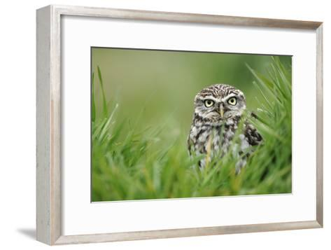 Little Owl-Colin Varndell-Framed Art Print