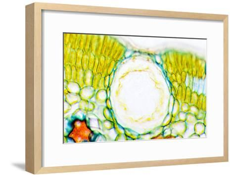 Heather Leaf Stomata, Light Micrograph-Dr. Keith Wheeler-Framed Art Print