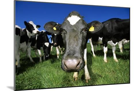 Cows-Jeremy Walker-Mounted Photographic Print