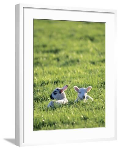 Lambs-Jeremy Walker-Framed Art Print