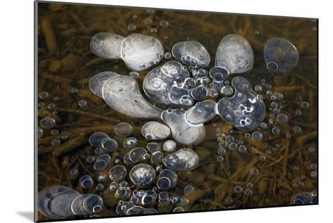 Methane Bubbles-Dr. Keith Wheeler-Mounted Photographic Print