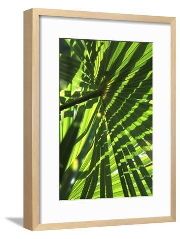 Palm Leaves-Dr. Keith Wheeler-Framed Art Print