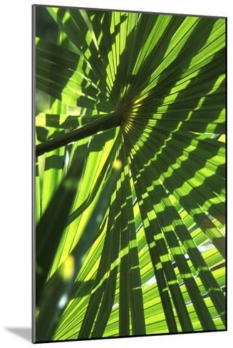 Palm Leaves-Dr. Keith Wheeler-Mounted Photographic Print