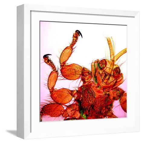 Sheep Ked-Dr. Keith Wheeler-Framed Art Print