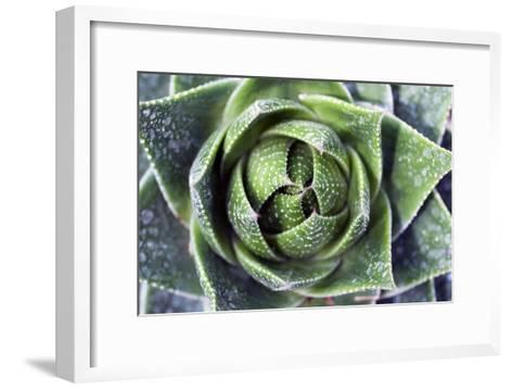 Aloe Plant (Aloe Aristata)-Dirk Wiersma-Framed Art Print