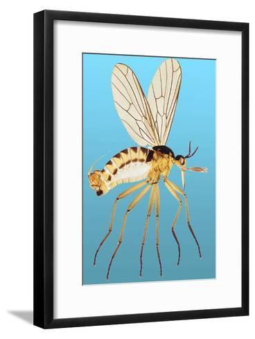 Snipe Fly, Light Micrograph-Dr. Keith Wheeler-Framed Art Print