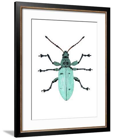 Nettle Weevil-Dr. Keith Wheeler-Framed Art Print