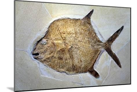 Fish Fossil-Dirk Wiersma-Mounted Photographic Print