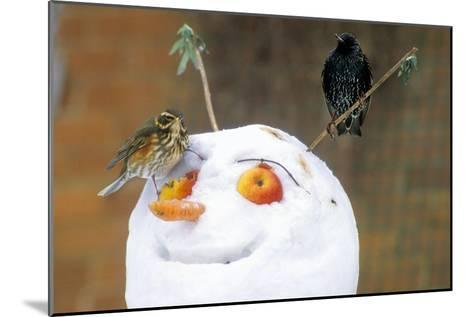 Birds Perched on a Snowman-Dr. Keith Wheeler-Mounted Photographic Print