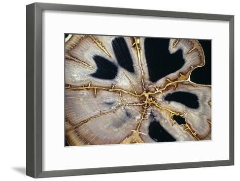 Petrified Hermanophyton Tree Trunk-Dirk Wiersma-Framed Art Print