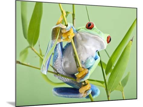 Red-eyed Tree Frog-Linda Wright-Mounted Photographic Print
