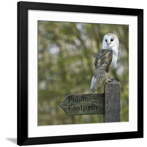 Barn Owl-Linda Wright-Framed Art Print