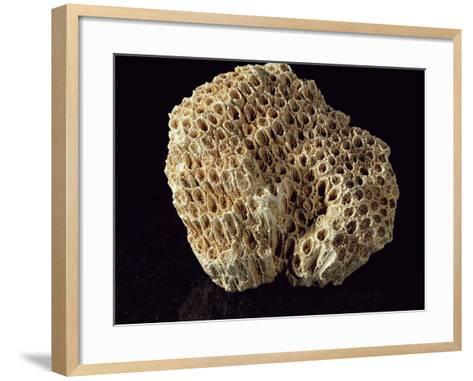 Coral Skeleton-Dirk Wiersma-Framed Art Print