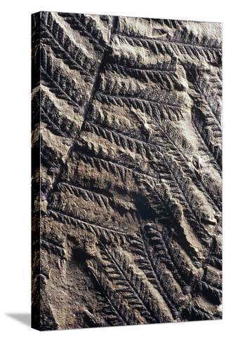 Fossilised Fern-Dirk Wiersma-Stretched Canvas Print