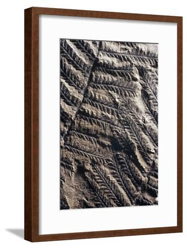 Fossilised Fern-Dirk Wiersma-Framed Art Print