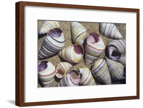 Freshwater Snail Shells-Dirk Wiersma-Framed Art Print