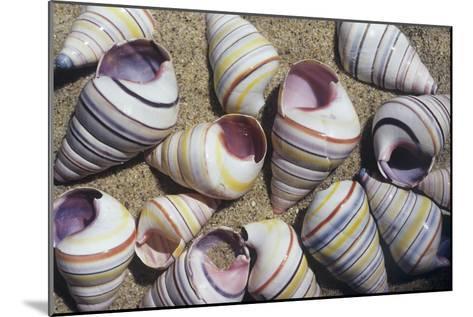 Freshwater Snail Shells-Dirk Wiersma-Mounted Photographic Print