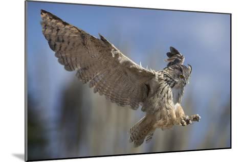European Eagle Owl In Flight-Linda Wright-Mounted Photographic Print
