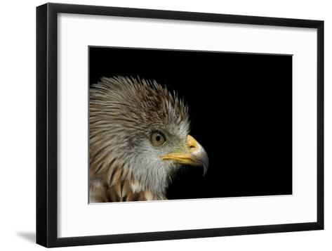 Red Kite-Linda Wright-Framed Art Print