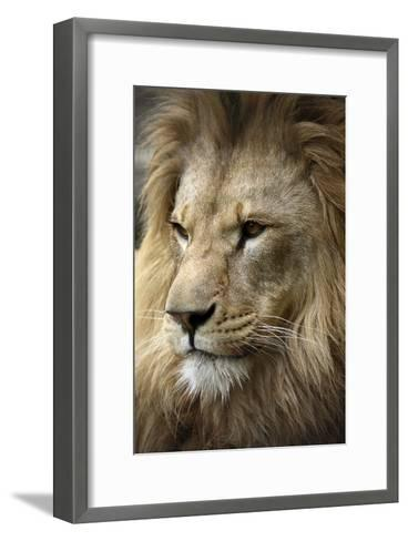 Lion-Linda Wright-Framed Art Print