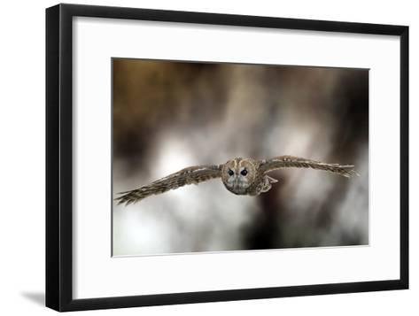 Tawny Owl-Linda Wright-Framed Art Print