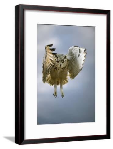 Bengalese Eagle Owl In Flight-Linda Wright-Framed Art Print