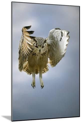 Bengalese Eagle Owl In Flight-Linda Wright-Mounted Photographic Print