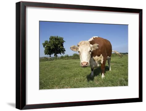 Hereford Cow-Linda Wright-Framed Art Print