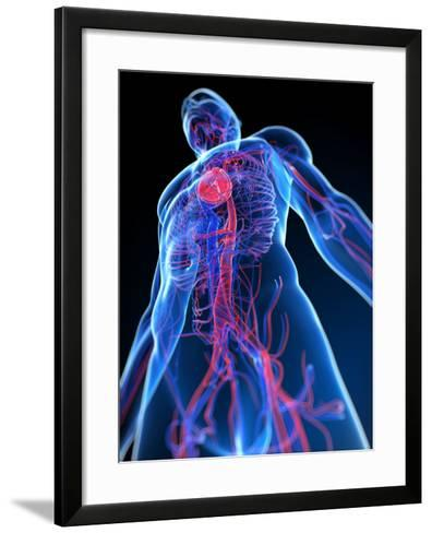 Cardiovascular System, Artwork-SCIEPRO-Framed Art Print