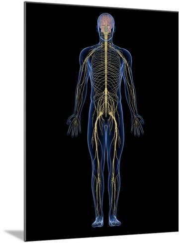 Human Nervous System, Artwork-SCIEPRO-Mounted Photographic Print