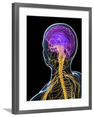 Human Nervous System, Artwork-SCIEPRO-Framed Art Print