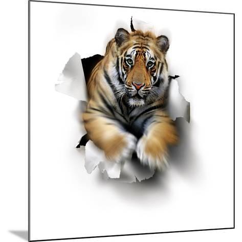 Tiger, Artwork-SMETEK-Mounted Photographic Print