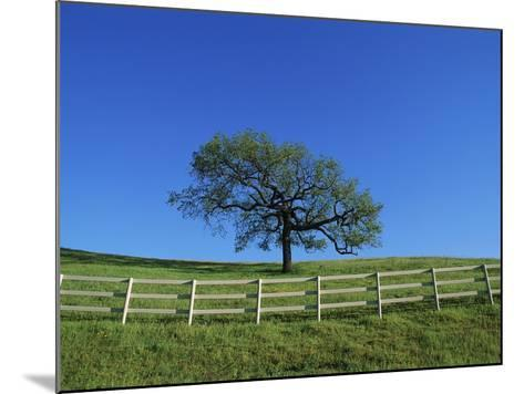 Tree and Fence in Pasture-Craig Aurness-Mounted Photographic Print