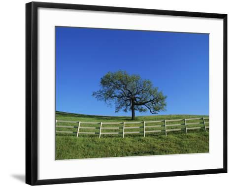 Tree and Fence in Pasture-Craig Aurness-Framed Art Print