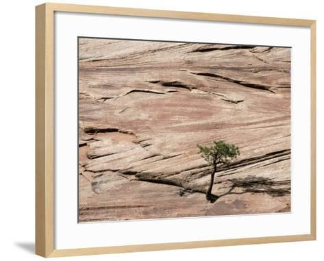 Lone Tree Growing in Rock Formation--Framed Art Print