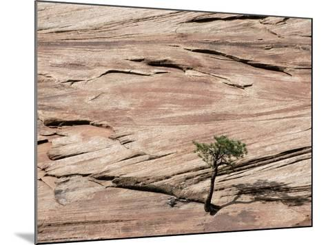 Lone Tree Growing in Rock Formation--Mounted Photographic Print