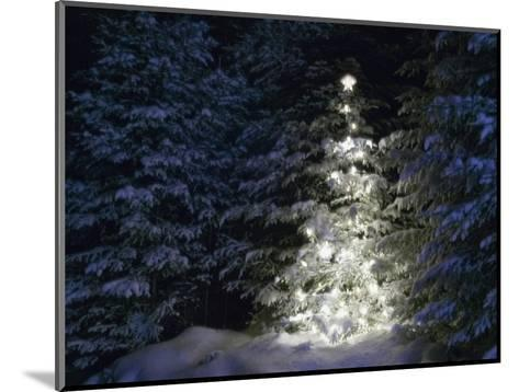 Illuminated Christmas Tree in Snow-Larry Williams-Mounted Photographic Print
