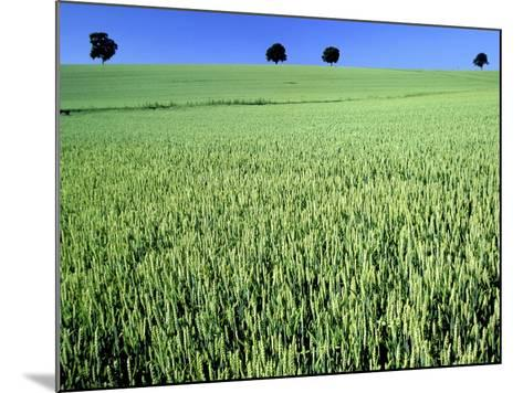 Wheat field-Frank Krahmer-Mounted Photographic Print