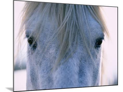 Camargue Horse-Frank Lukasseck-Mounted Photographic Print