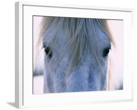 Camargue Horse-Frank Lukasseck-Framed Art Print