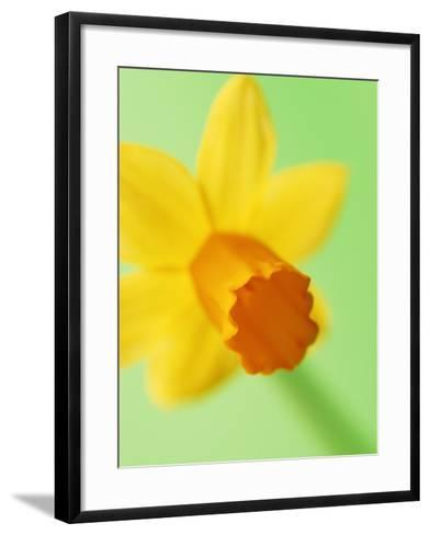 Yellow daffodil--Framed Art Print