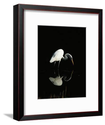Great Egret-Nik Wheeler-Framed Art Print