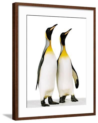 Two king penguins-Josh Westrich-Framed Art Print