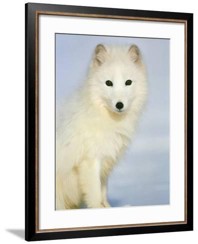 Polar fox sitting in the snow-Theo Allofs-Framed Art Print