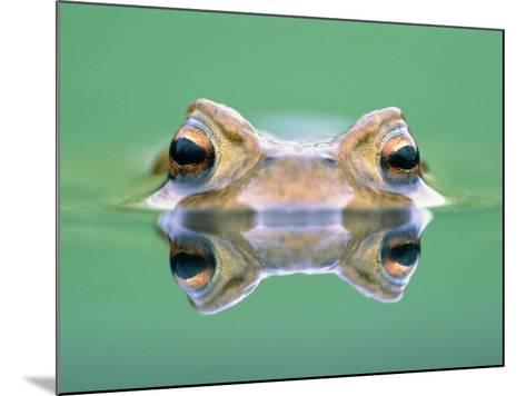 Frog in the water-Herbert Kehrer-Mounted Photographic Print