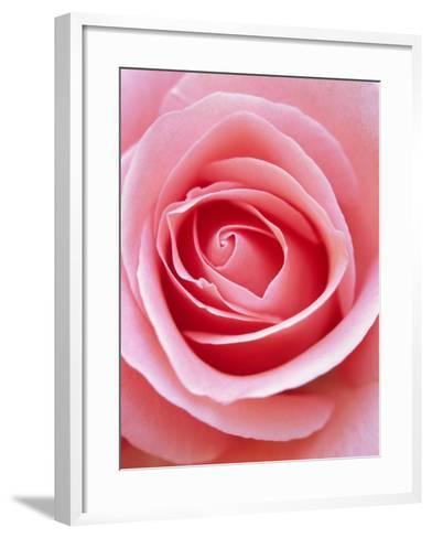 Pink rose-Herbert Kehrer-Framed Art Print