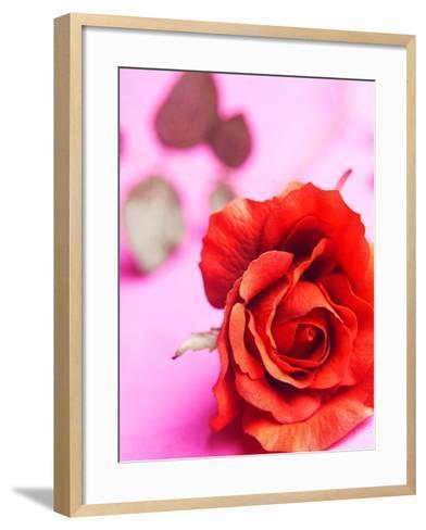 Red rose--Framed Art Print