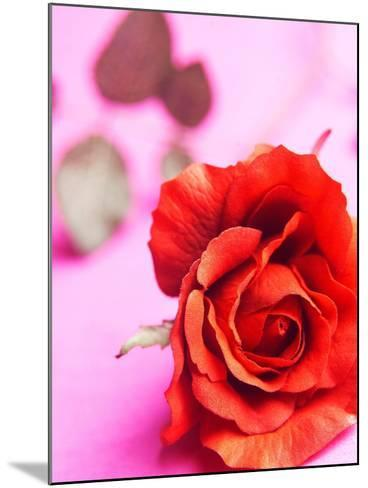 Red rose--Mounted Photographic Print