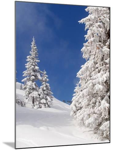 Snowcovered landscape--Mounted Photographic Print