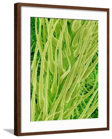 Underside of a Stinging Nettle Leaf-Micro Discovery-Framed Art Print